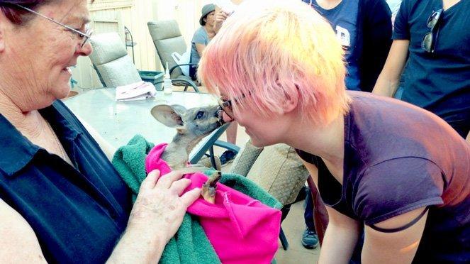 10 Verrückte Dinge, die ich tatsächlich in Ozeanien gemacht habe - Kängurus geküsst