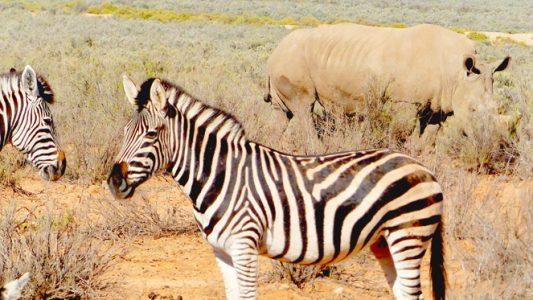 Top 10 Kapstadt Sehenswürdigkeiten, die man mal erlebt haben musst - Safari