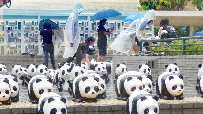 Hong Kong Guide - moving Panda exhibition