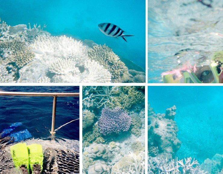 Whitsunday Islands Tour Impressionen