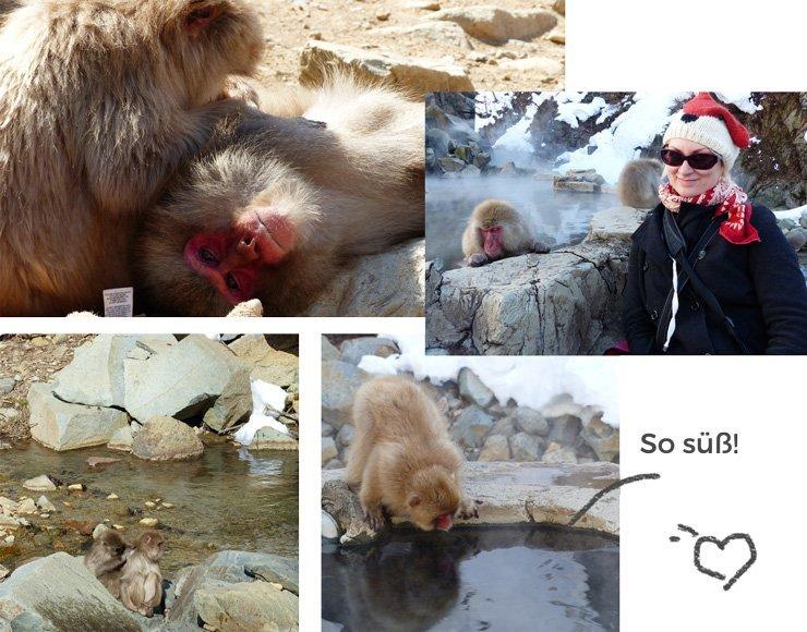 Was dir bei einem Japan-Urlaub im Affenpark erwartet