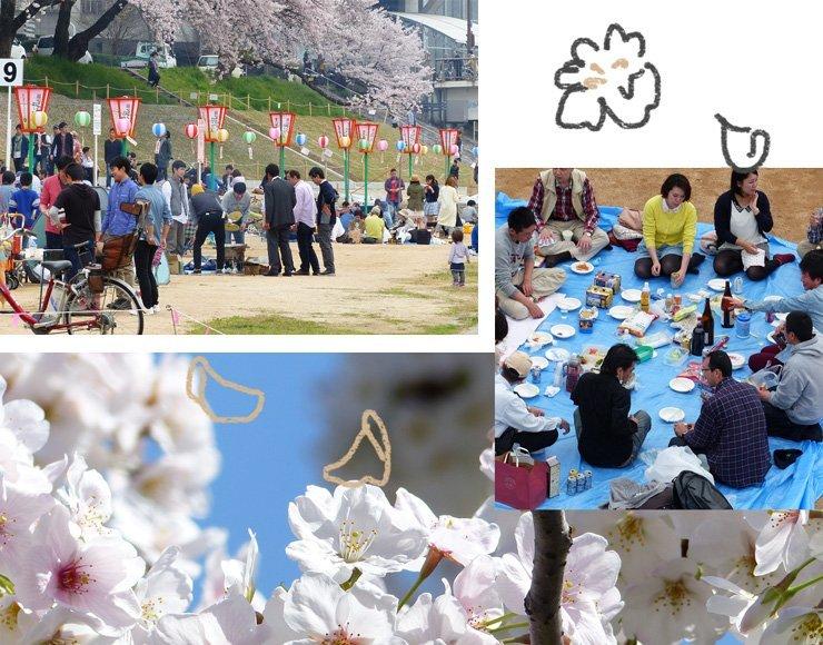 Erlebe die Japanische Kirschblüte – was ist ein Hanami und was isst man?