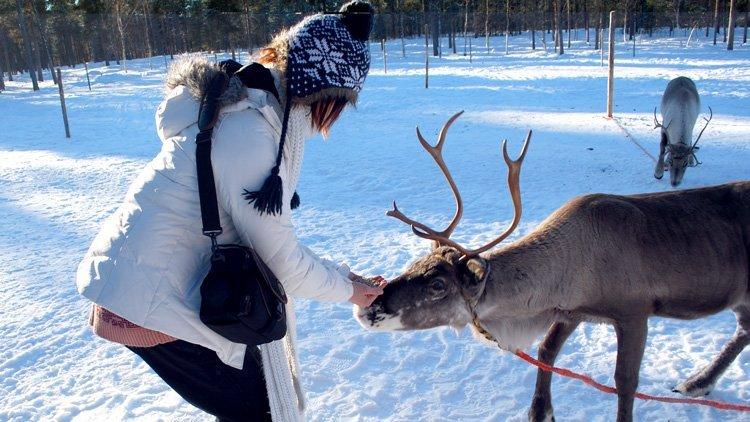 10 unschlagbare Gründe das finnische Lappland im Winter zu besuchen - Tentierfütterung
