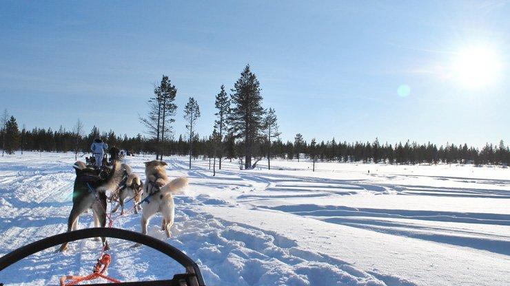 10 unschlagbare Gründe Finnisch Lappland im Winter zu besuchen - Huskieschlittenfahrt