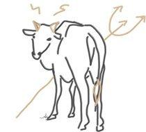 Hong Kongs Kühe können fies sein