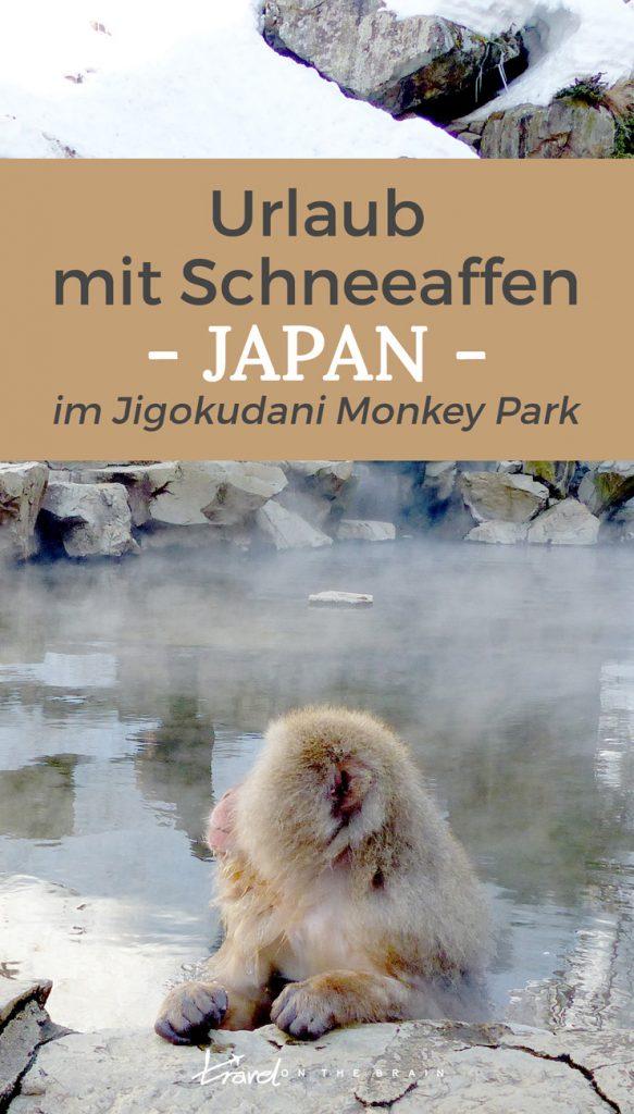 Japan-Urlaub mit Schneeaffen im Jigokudani Monkey Park