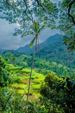 Sekumpul Wasserfall in Nordbali Indonesien