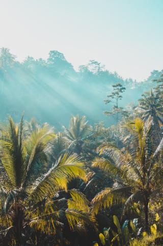 Tegalalang Reisfelder bei Ubud Bali