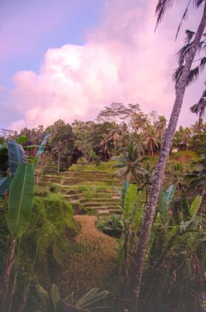 Tegalalang Reisfelder bei Sonnenaufgang