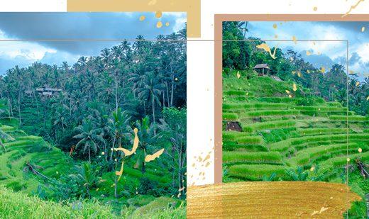 Saftig grüne Reisterrassen in Tegallalang, Bali nach Sonnenaufgang