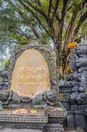Heiliger Baum im Wassertempel Pura Tirta Empul bei Ubud