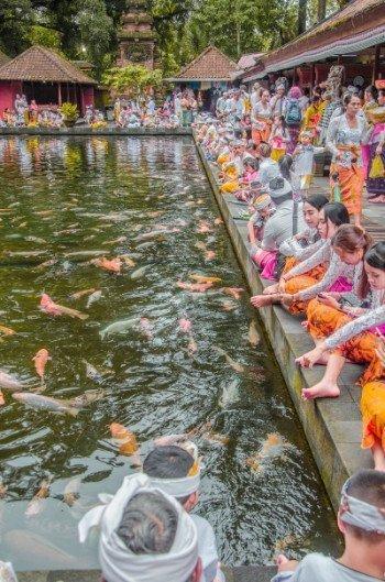 Fischteich im Wassertempel Pura Tirta Empul bei Ubud