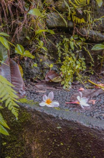 Gefallene Blumen auf nassen Stein im Dschungel bei Ubud Bali
