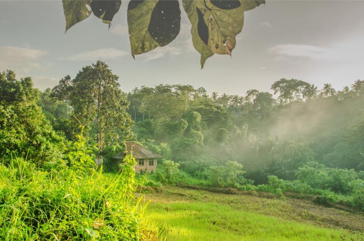 Altes Haus im Reisfeld bei Ubud