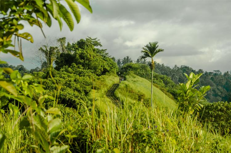 Bewölkter Tag auf dem Campuhan Ridge Walk bei Ubud Bali