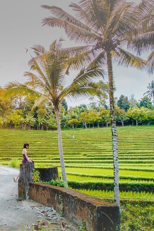 Reisfelder in Südbali mit junger Frau