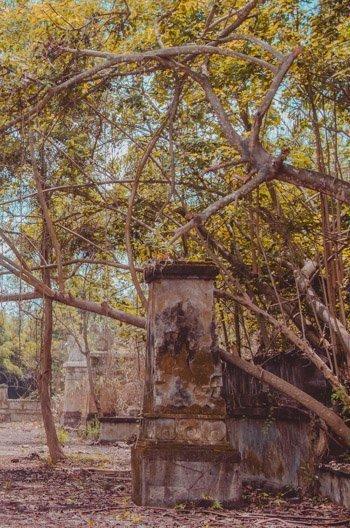 Die Natur holt sich das Areal Von Taman Festival bei Sanur wieder - Bäume ranken um ein Tor