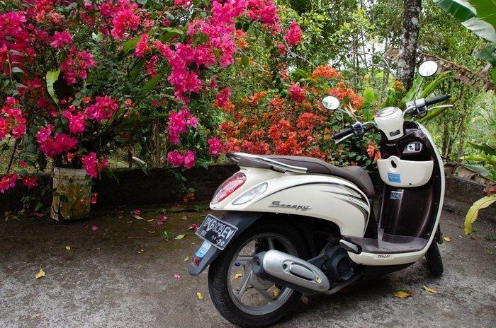 Moped auf Parkplatz beim Sing Sing Wasserfall