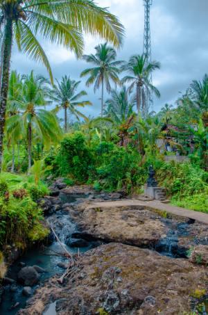 kleiner Fluss unter Palmen in Südbali