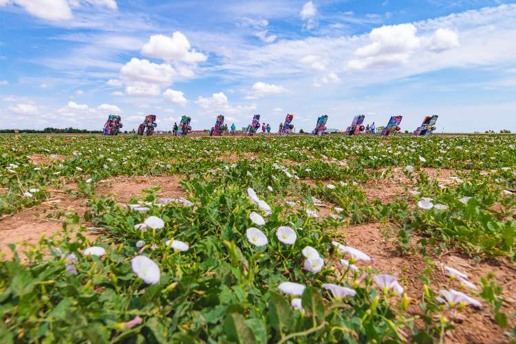 Cadillac Ranch TExas - flowers- photo by Travel Texas