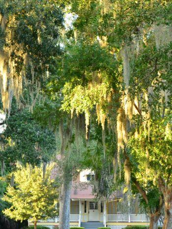 Bäume voller spanischem Moos in Jacksonville, Florida, USA