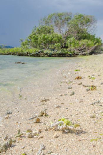 Strand mit Mangrove im Westbali Nationalpark