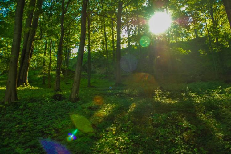 Wanderpfade im Altenstein Park in Thüringen
