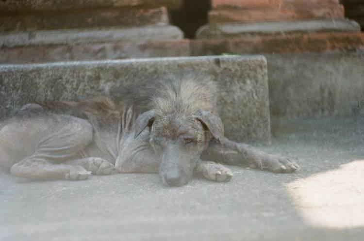 abgemagerter Hund auf Bali