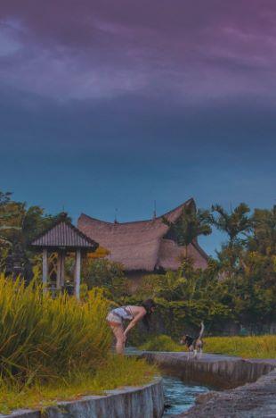 Nachbarshund bei meiner digitale Nomaden Villa in Bali