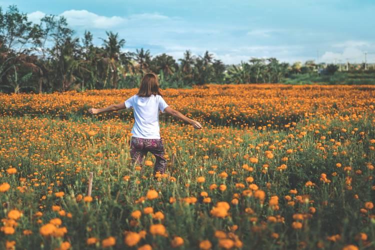 Ringelblumenfelder auf bali