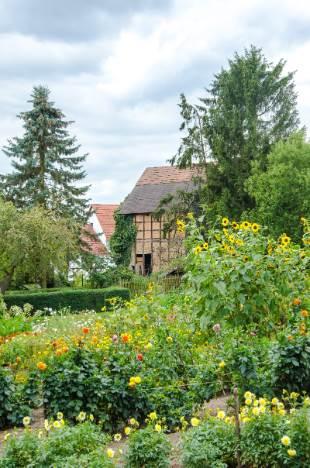 Obstgarten bei Schloss Kochberg