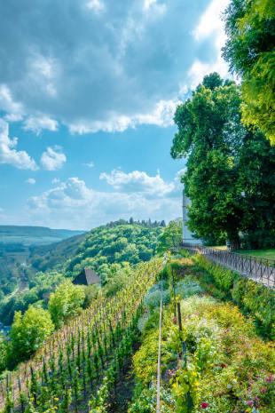 Blick über die Weinberge bei den Dornburger Schlössern