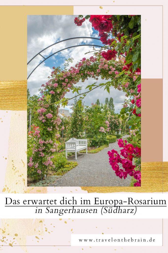 Das erwartet dich im Europa-Rosarium in Sangerhausen (Südharz)