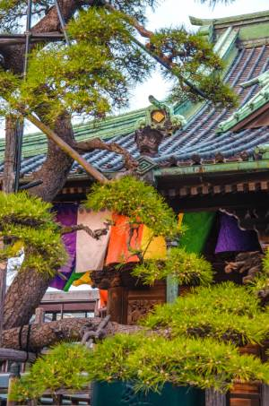 Baum beim Taishakuten Daikyo-ji Tempel