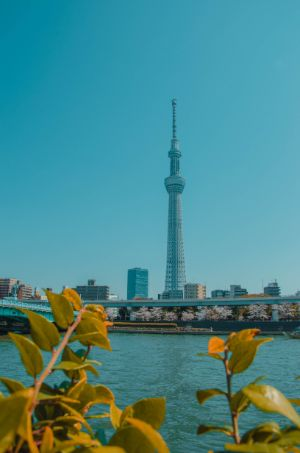 Skytree und Fluss in Tokio