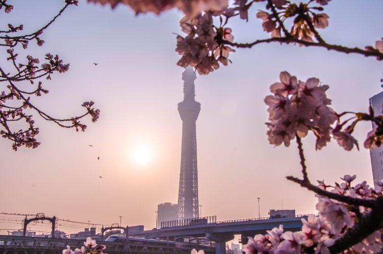 Skytree vom Sumida Parkaus gesehen