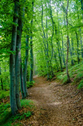 Boyana Berg Wanderung im Sommer