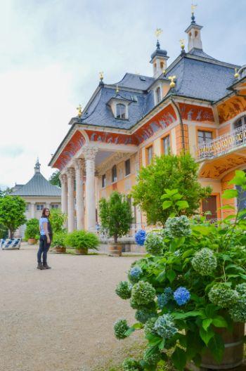Schloss Pillnitz mit Hortensien