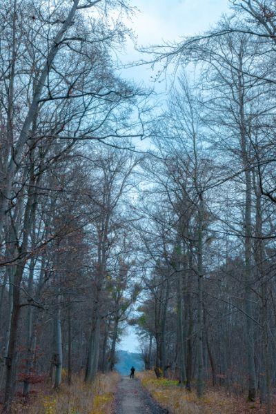Sichtachse im Forst bei Jena