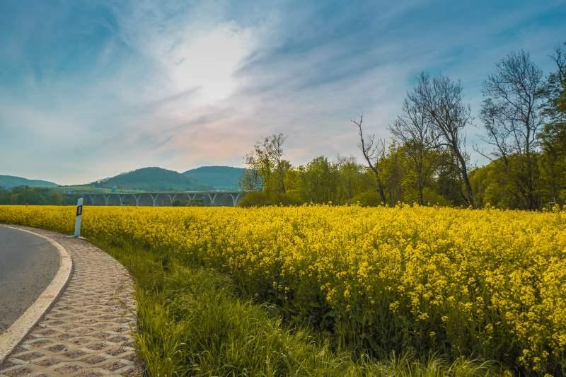 gelbe Rapsfelder in Jena bei der A4