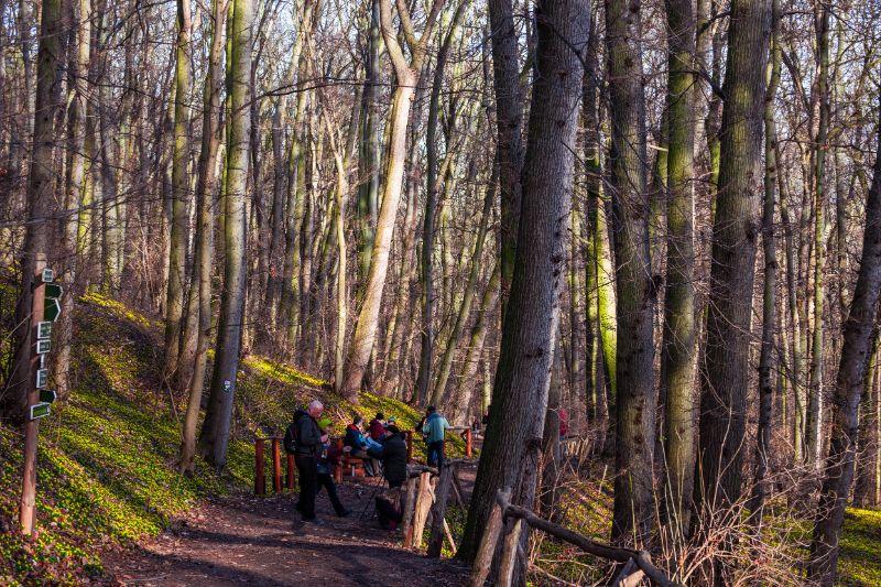 Wandergruppe umringt von Winterlingen im Wald