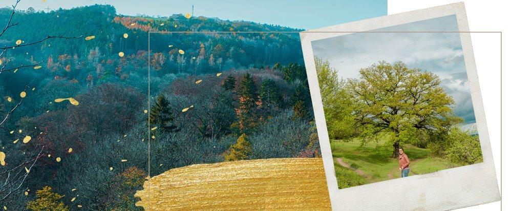 Landschaftsbilder vom Wandern in Jena