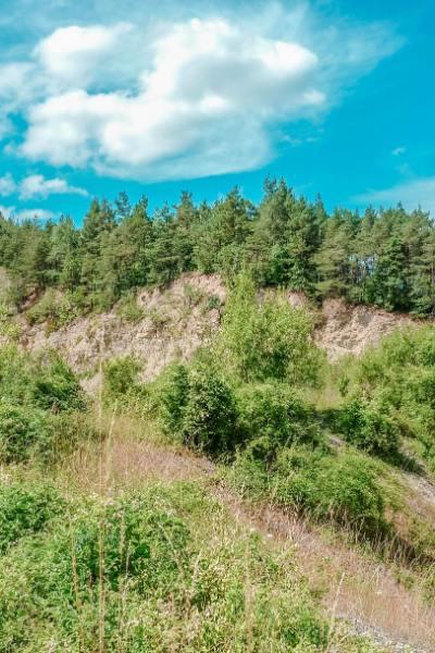 grüne Büsche und Bäume auf Felsen