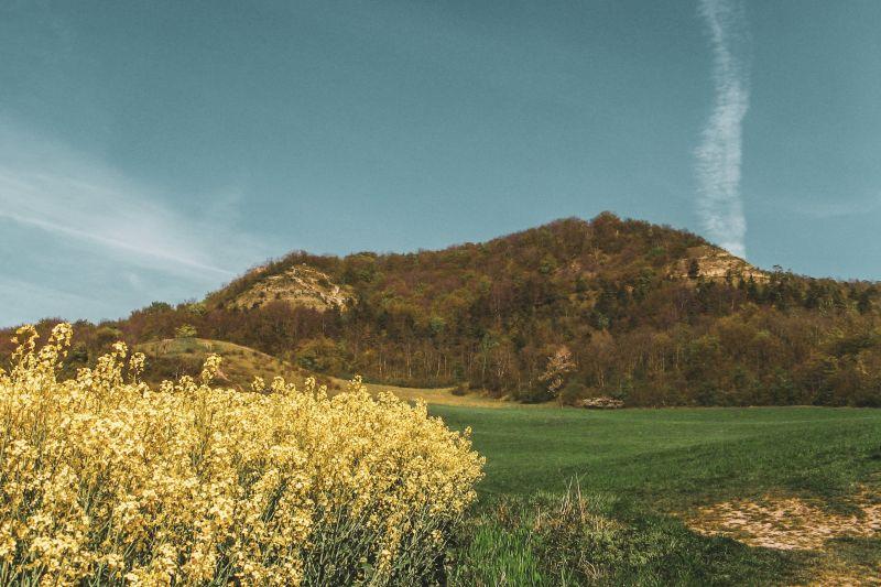 Rapsfeld und grüne Wiesen vor bewaldetem Berg