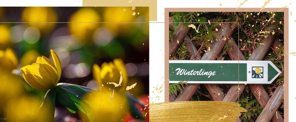 umrahmte Fotos von den Jena Winterlingen mit Wegweiser