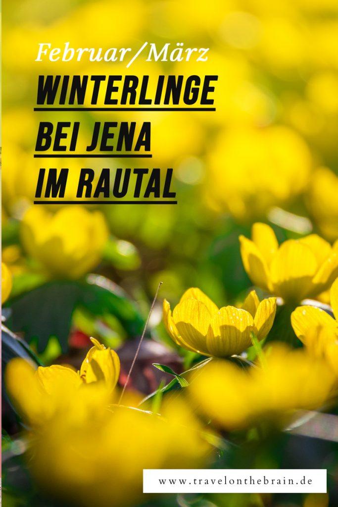 Pin: Ausflugstipp: Die Winterlinge im Rautal bei Jena und Closewitz
