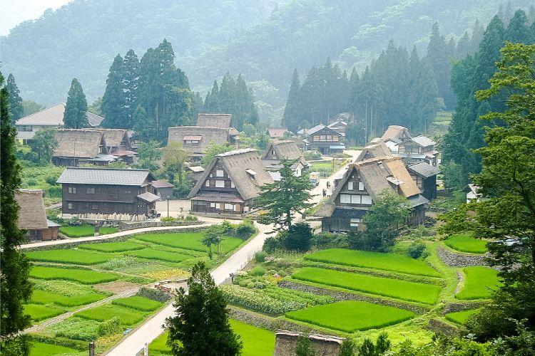 Gokayama Dorf im grünen