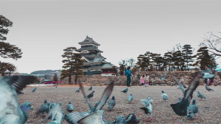 Tauben vor der Burg Matsumoto