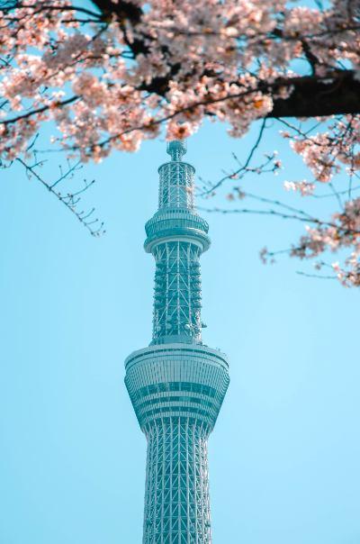Skytree umrahmt von Kirschblüten