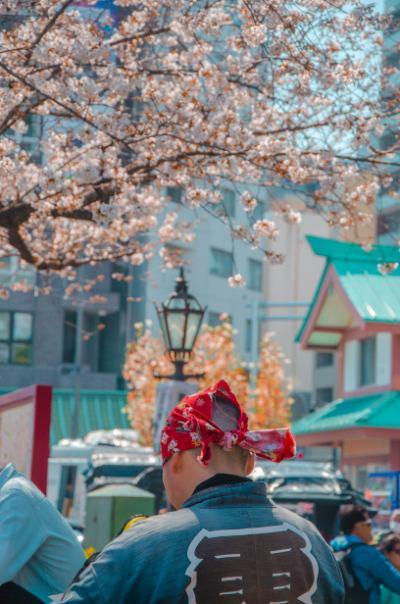 Mann vor Kirschblüten in Asakusa Tokio
